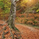 Autumn tree in forest and river flow. Nature composition.